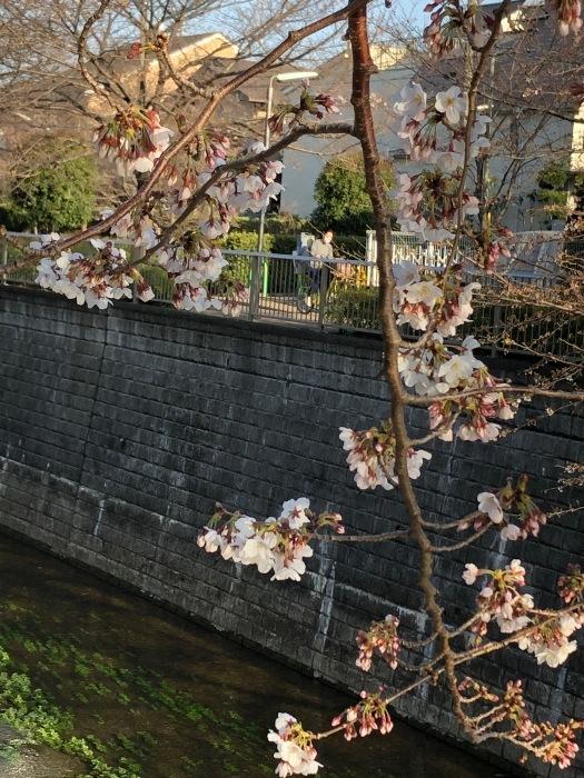 季節は春!_c0012247_17153622.jpg