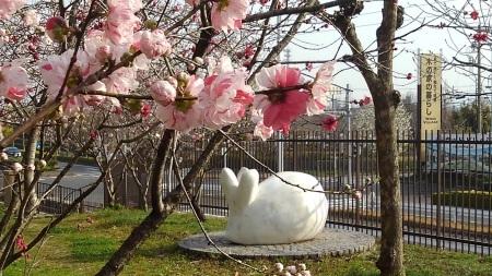 春のおとづれ_c0141652_15241372.jpg