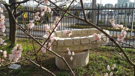 春のおとづれ_c0141652_15242051.jpg