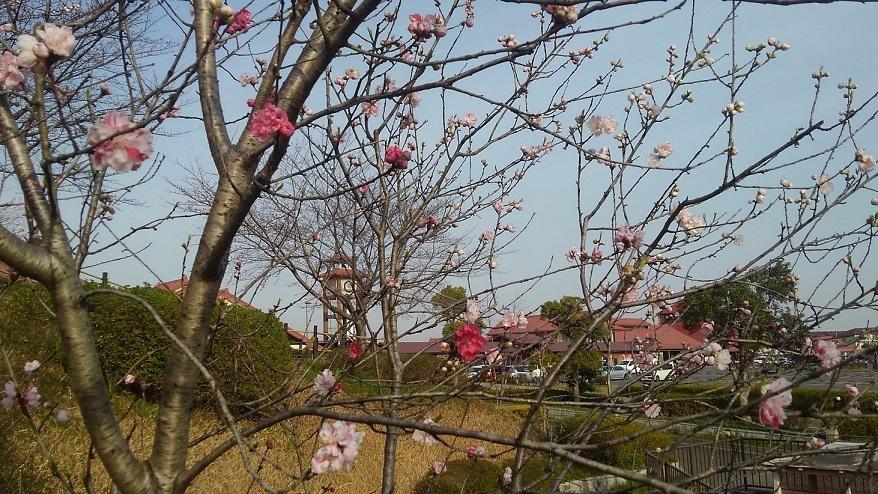春のおとづれ_c0141652_15242266.jpg