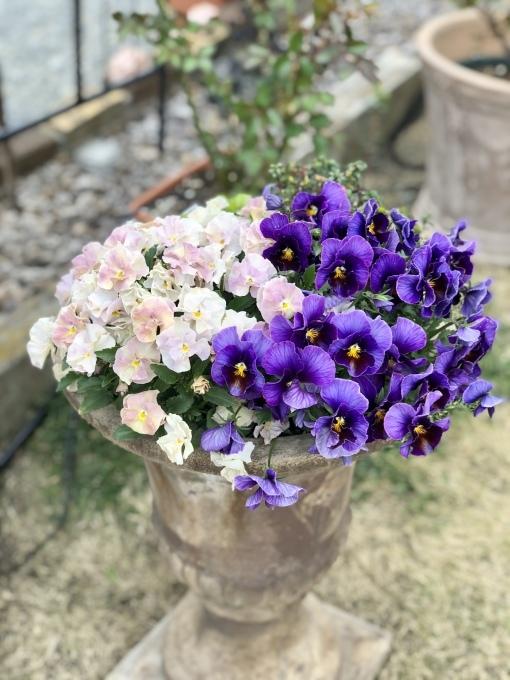 薬剤散布♫と、バラの蕾のその後♡_a0396654_19113234.jpeg