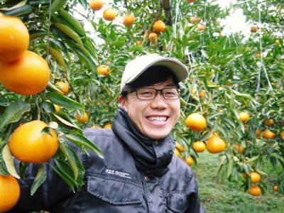 究極の柑橘「せとか」 令和2年度も大好評でリピート購入続出!今期発送予定分はまもなくカウントダウン!_a0254656_16393499.jpg