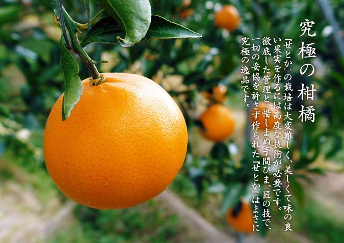 究極の柑橘「せとか」 令和2年度も大好評でリピート購入続出!今期発送予定分はまもなくカウントダウン!_a0254656_16550580.jpg