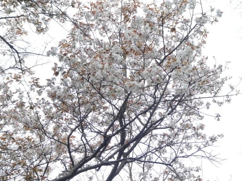 海側急斜面土留目造り・ササユリ発芽調査・・・うみべの森_c0108460_16542087.jpg