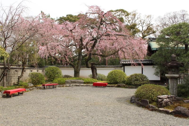 3月22日 有栖川宮旧邸の枝垂桜_a0023466_16170043.jpg