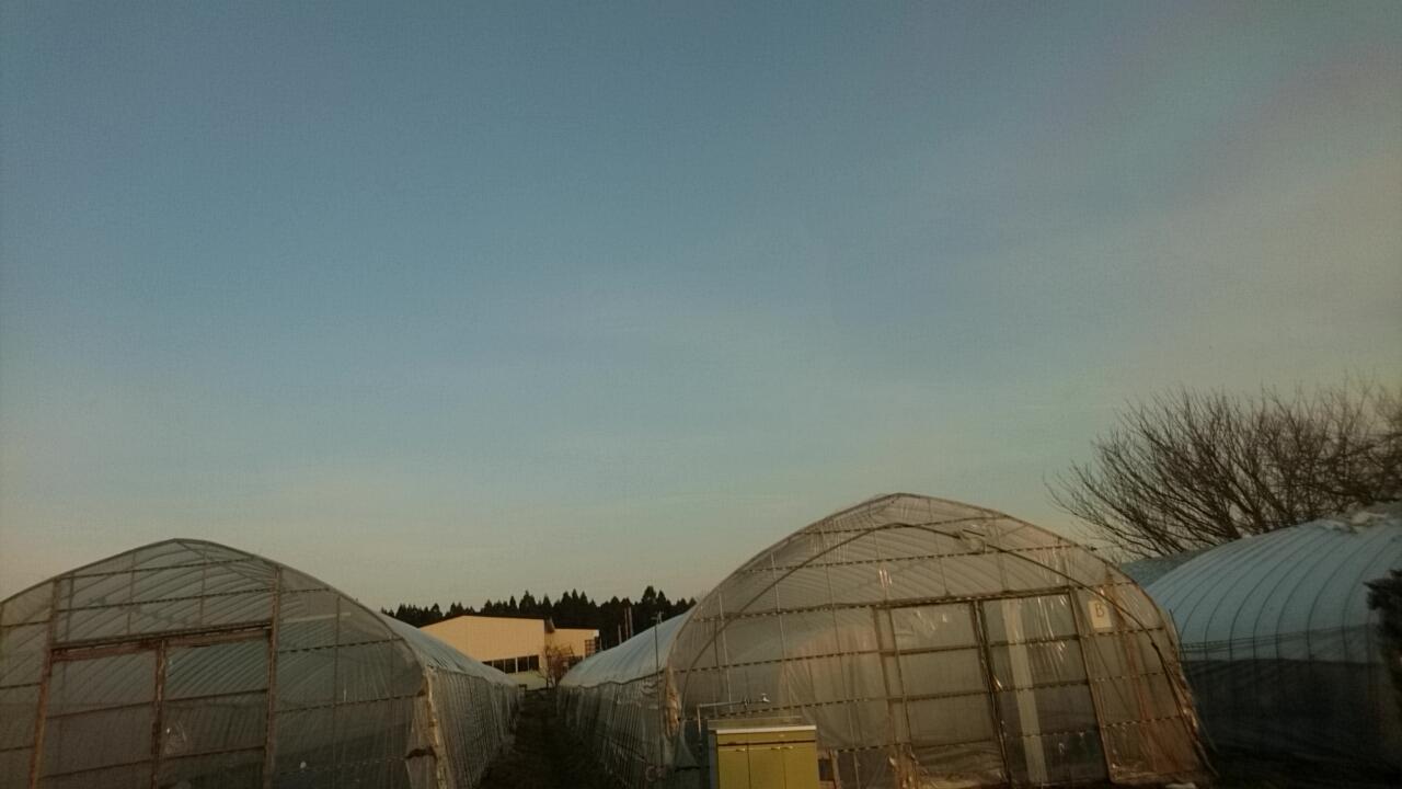 今年にかける函館の農業_b0106766_05551968.jpg