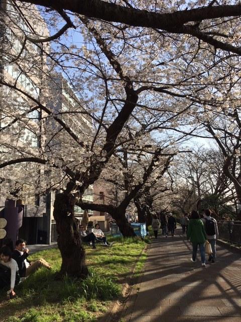 今年も桜は・・・_c0228466_18361264.jpg
