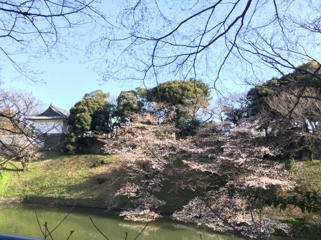 今年も桜は・・・_c0228466_18382466.jpg