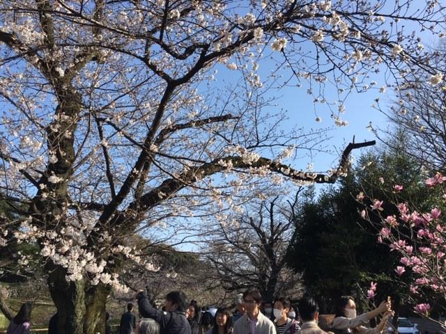 今年も桜は・・・_c0228466_18383855.jpg