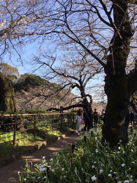 今年も桜は・・・_c0228466_18401509.jpg
