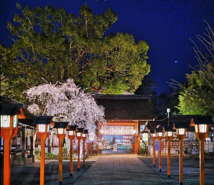 桜 2020_f0021869_21274960.jpg
