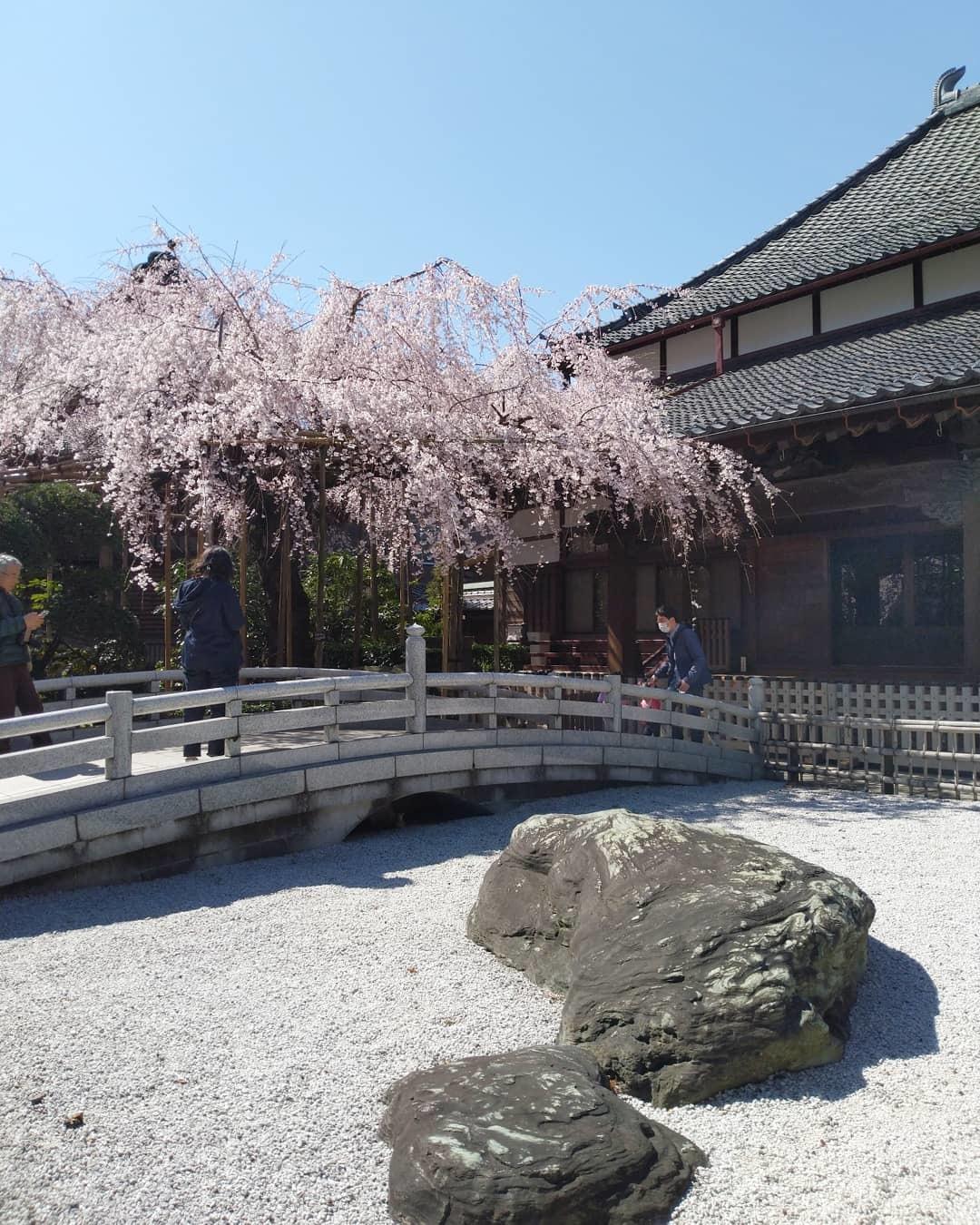 桜の季節_b0224770_21573778.jpg