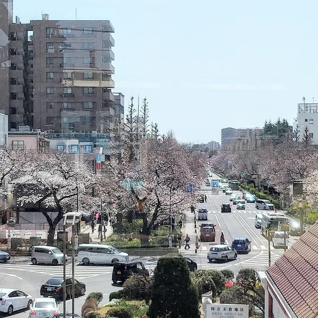 桜の季節_b0224770_21574005.jpg