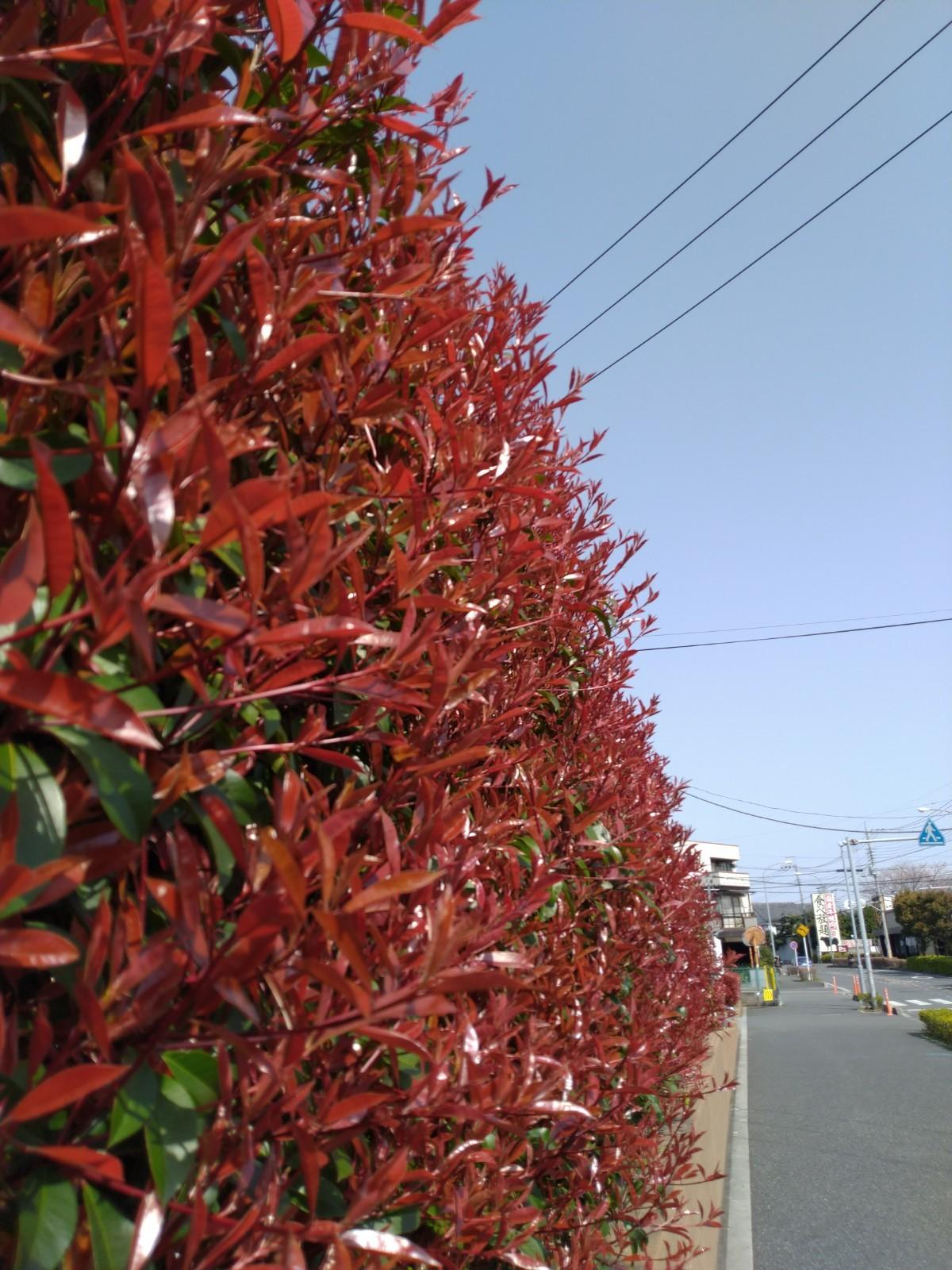 桜の季節_b0224770_21574503.jpg