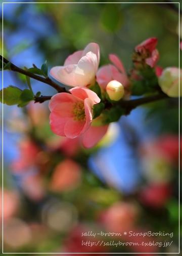 心弾む春!彩る花_d0132371_10552803.jpg