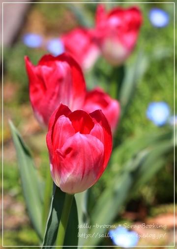 心弾む春!彩る花_d0132371_10555744.jpg
