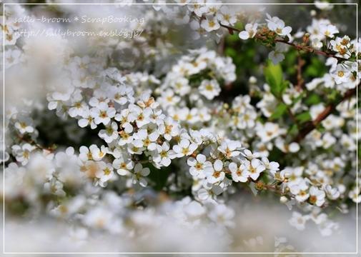 心弾む春!彩る花_d0132371_10561547.jpg