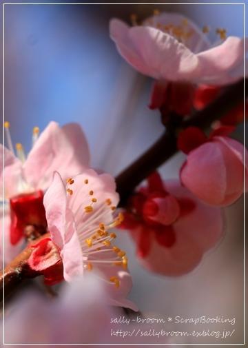 心弾む春!彩る花_d0132371_10562457.jpg