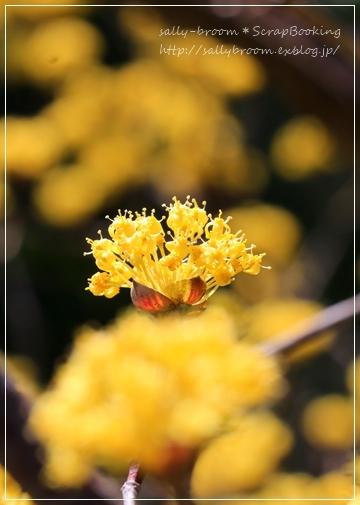 心弾む春!彩る花_d0132371_10563398.jpg