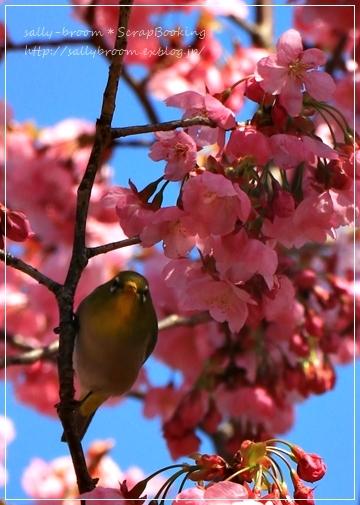 心弾む春!彩る花_d0132371_10564304.jpg