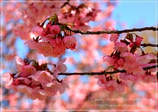 心弾む春!彩る花_d0132371_10565174.jpg