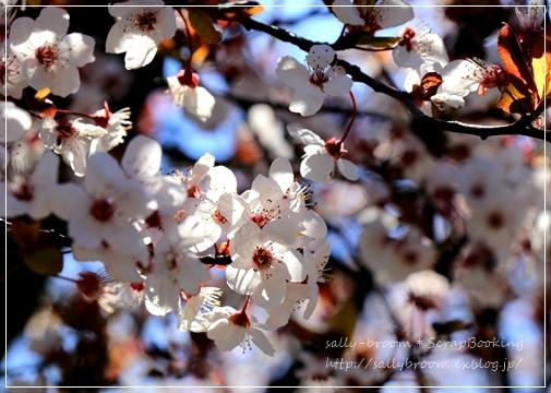 心弾む春!彩る花_d0132371_10570242.jpg