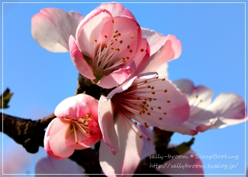 心弾む春!彩る花_d0132371_10571033.jpg
