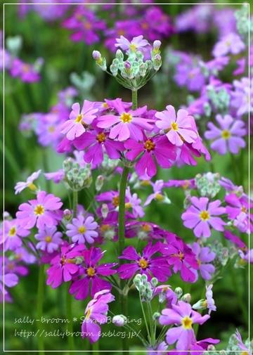 心弾む春!彩る花_d0132371_10571847.jpg