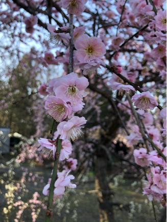 京都旅③~憧れの伏見稲荷と金閣寺_e0078071_18423590.jpg