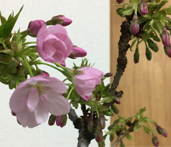 開花しました。_b0273973_17402302.jpg