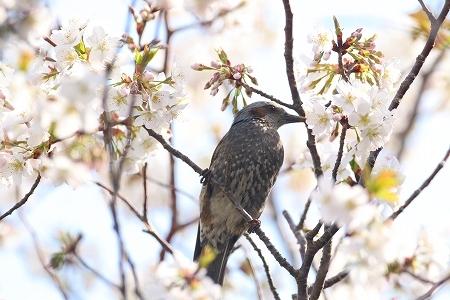 ★春の気配_e0046474_17372546.jpg