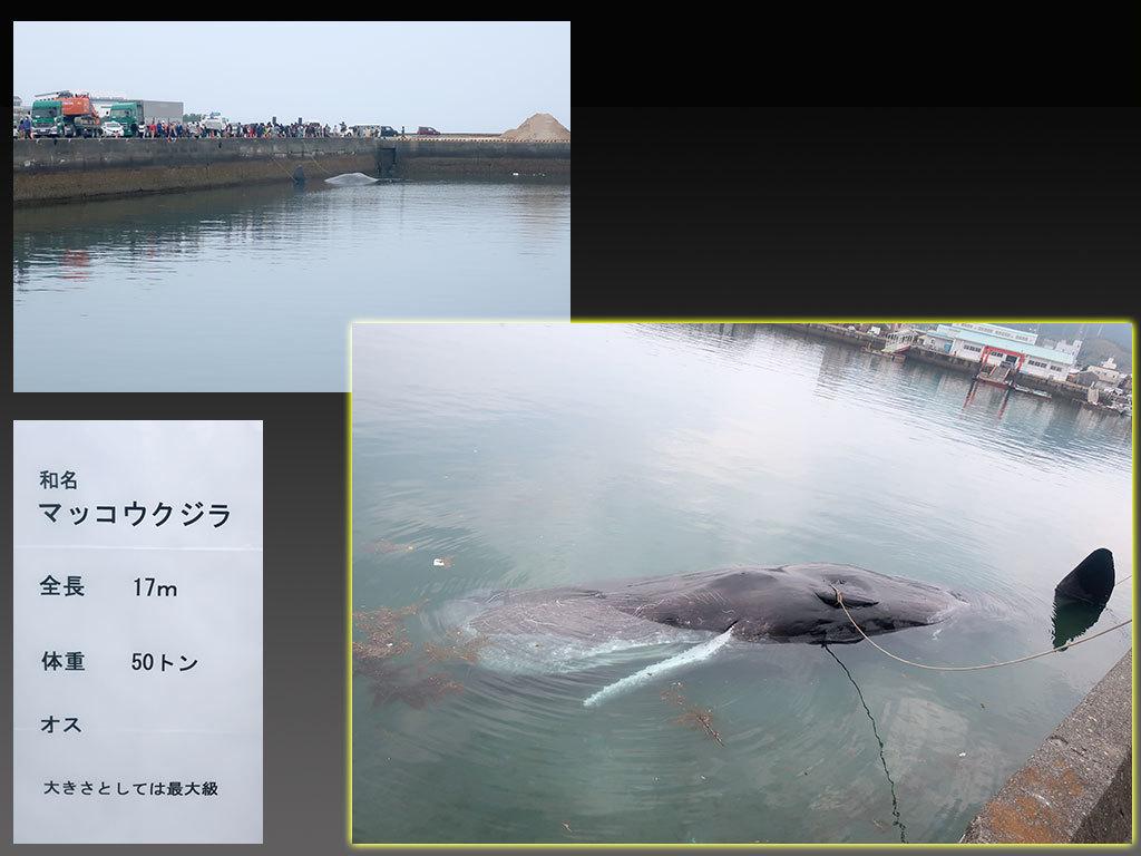 続 クジラ_d0148776_15343193.jpg