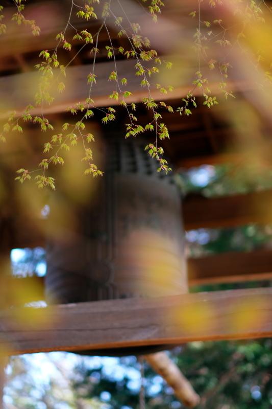 萌葱色に癒されて 水戸市川和田町「報佛寺」 2020・03・21_e0143883_04150767.jpg