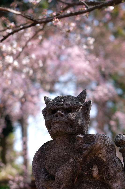 hikari vs tono 水戸市六地蔵寺にて_e0143883_10191695.jpg