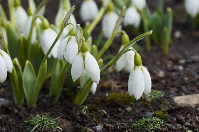 春一番_d0162994_09224175.jpg