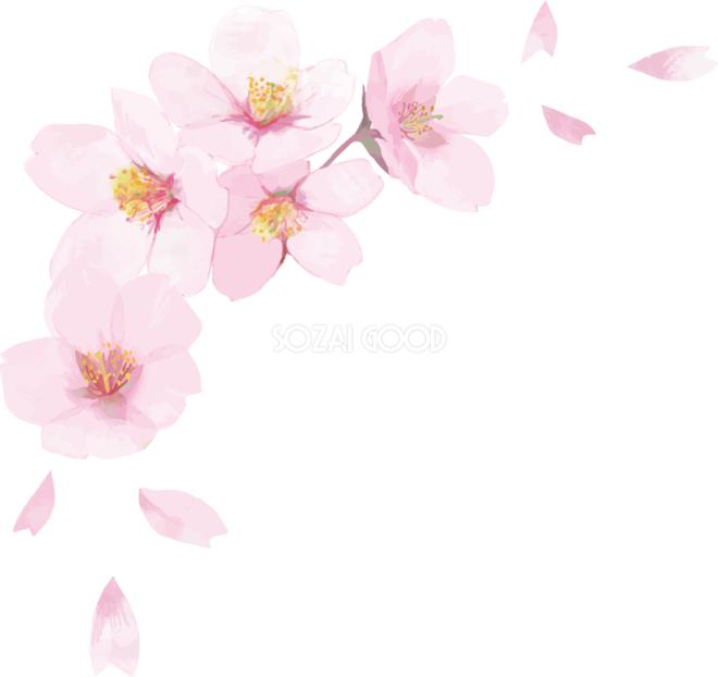 桜咲く優しい季節が今年もやってきました。_a0134296_00571502.jpg