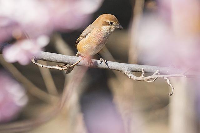 可愛い鳥_b0145398_23133059.jpg