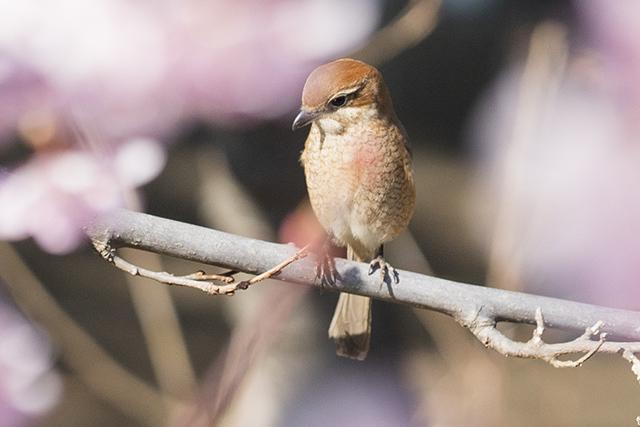 可愛い鳥_b0145398_23134669.jpg