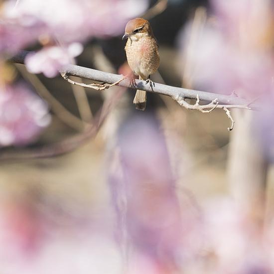 可愛い鳥_b0145398_23141023.jpg