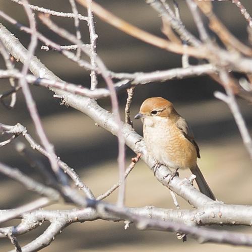 可愛い鳥_b0145398_23144752.jpg