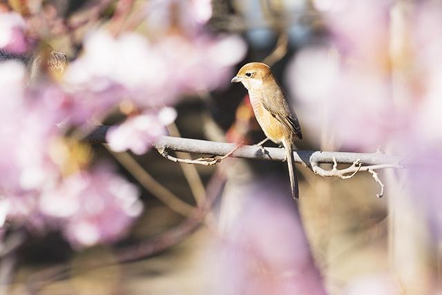 可愛い鳥_b0145398_23152370.jpg