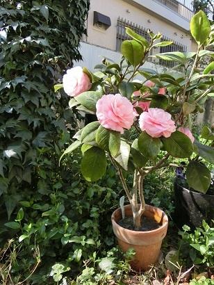 3月20日 花の季節 _c0013698_16034969.jpg