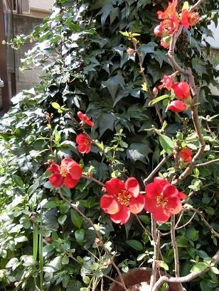 3月20日 花の季節 _c0013698_16043658.jpg