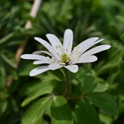 もうすぐ春が 06_f0099102_12170030.jpg