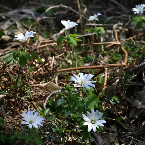 もうすぐ春が 06_f0099102_12171203.jpg