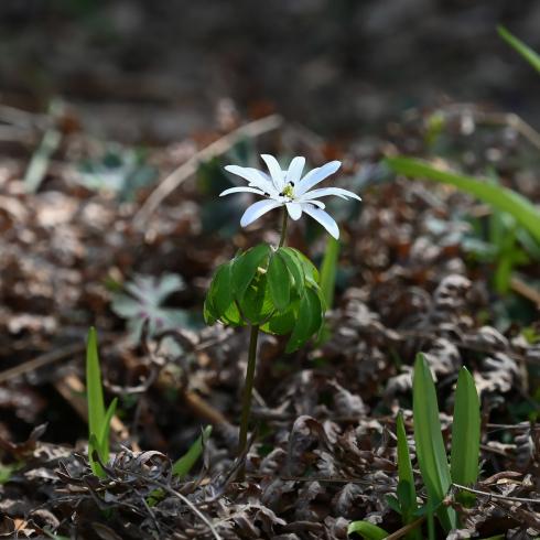 もうすぐ春が 06_f0099102_12175964.jpg