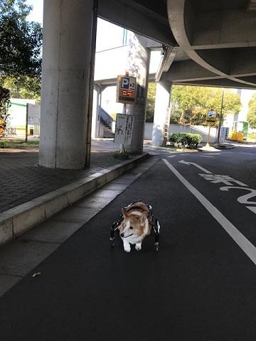 三連休は散歩三昧 ~幸太編~_f0242002_18401620.jpg