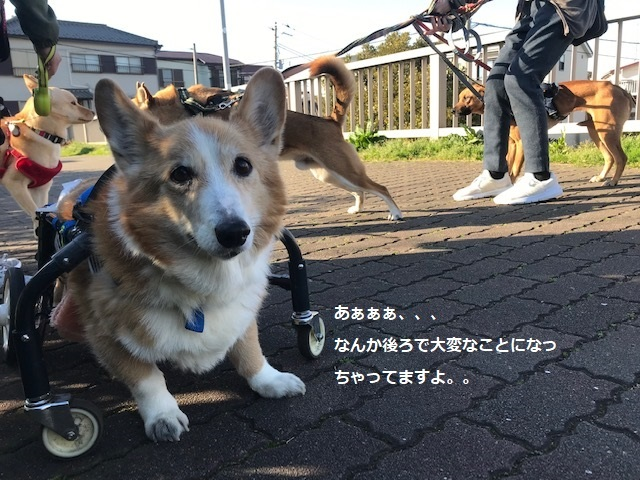 三連休は散歩三昧 ~幸太編~_f0242002_18515418.jpg