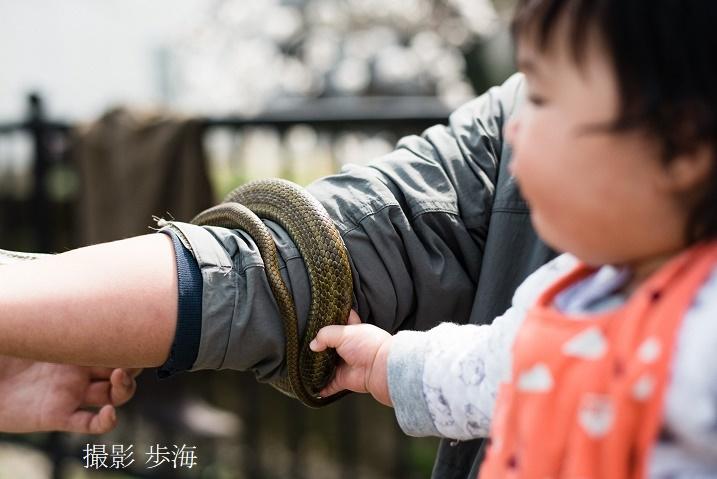 侍従川のクリーンアップ&調査(2020年3月)_b0348205_11410417.jpg
