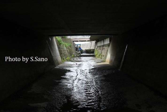 侍従川のクリーンアップ&調査(2020年3月)_b0348205_11444394.jpg